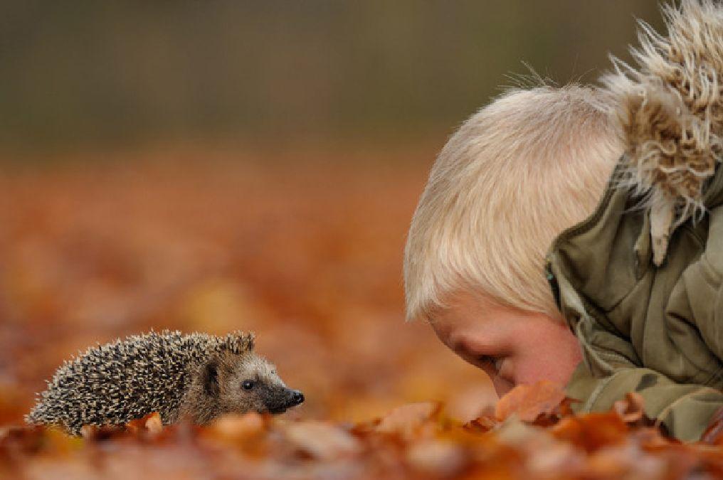 Ce photographe obtient la confiance des animaux sauvages et prend des clichés magnifiques
