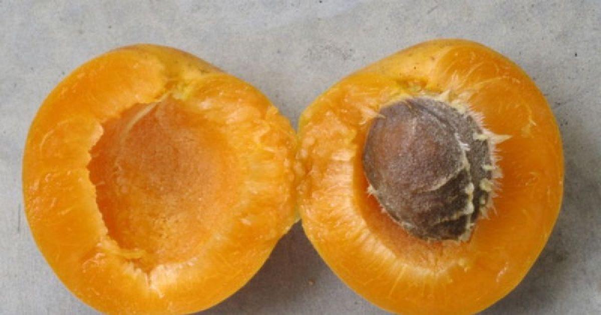 Pourquoi vous devez manger le Noyau d'abricot !  Les effets incroyables