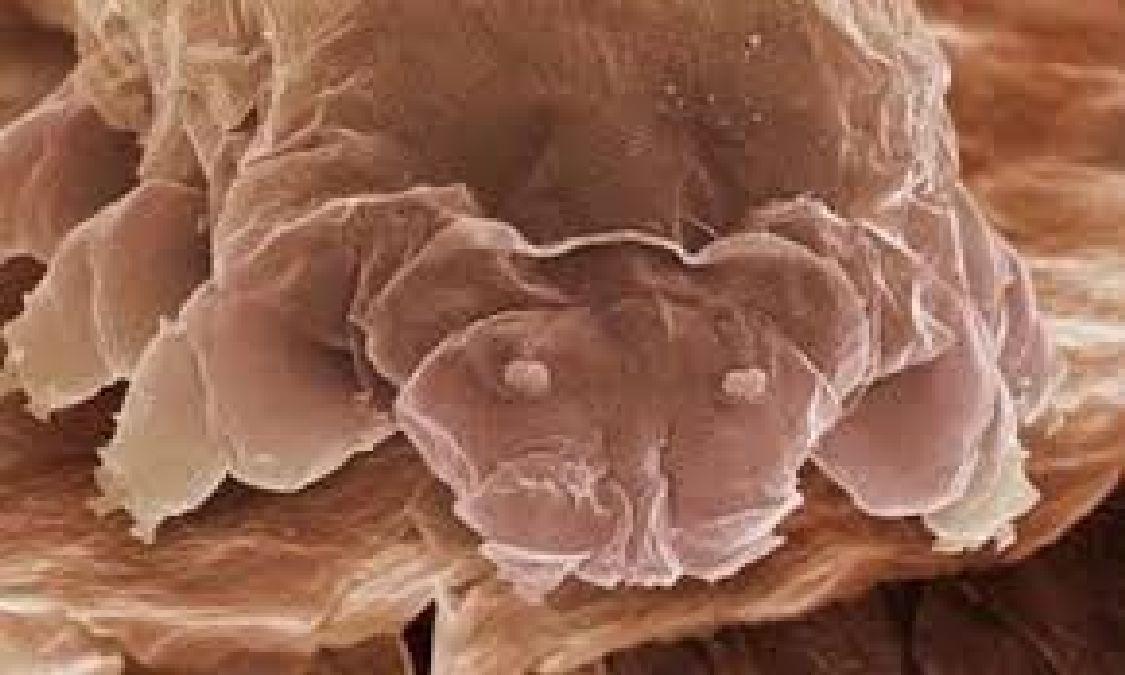 Découverte santé: Nos visages seraient de véritables nids d'acariens !