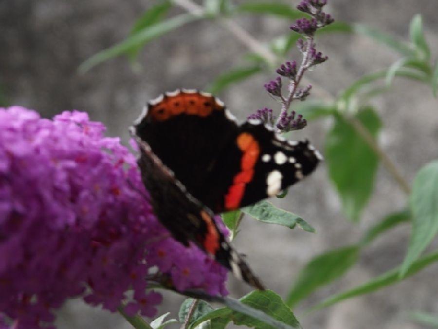 Comment attirer les papillons et les abeilles dans votre jardin