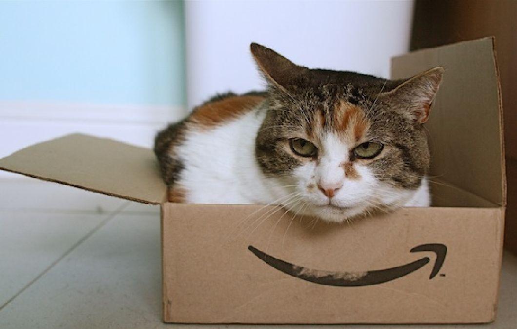Pourquoi les chats sont-ils amoureux des boites ?