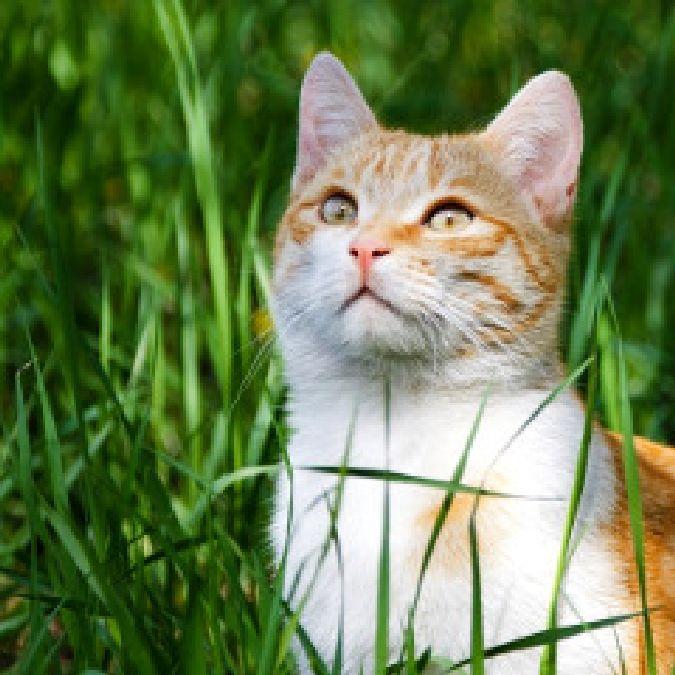 Les chats et chiens voient des choses que les humains ne voient pas