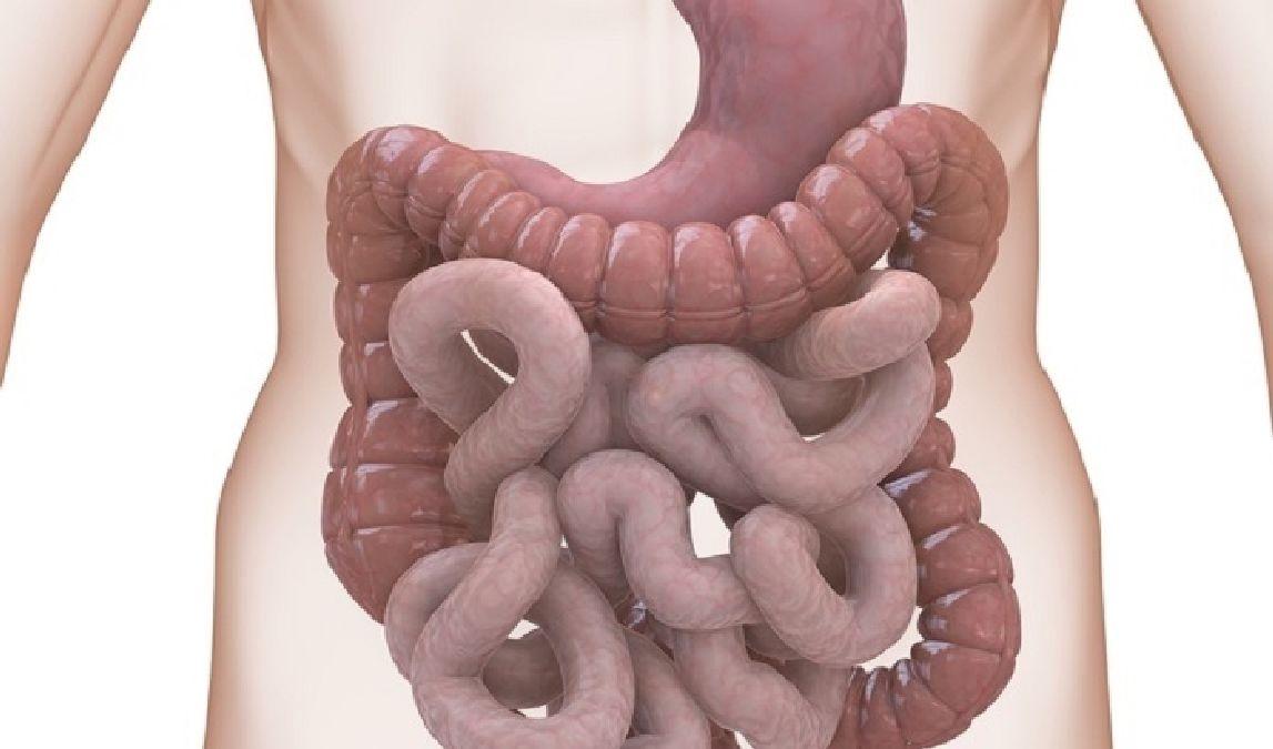 Cure pour vous débarrasser des déchets que contient votre colon