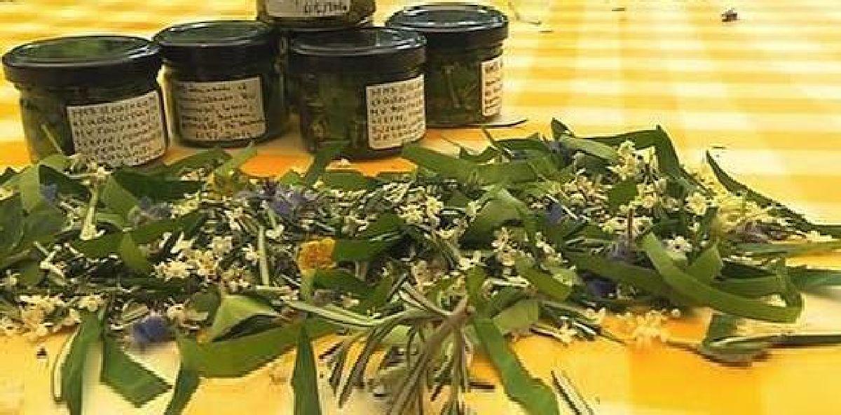 Ces plantes vous aideront à lutter contre la fatigue et à vous revigorer