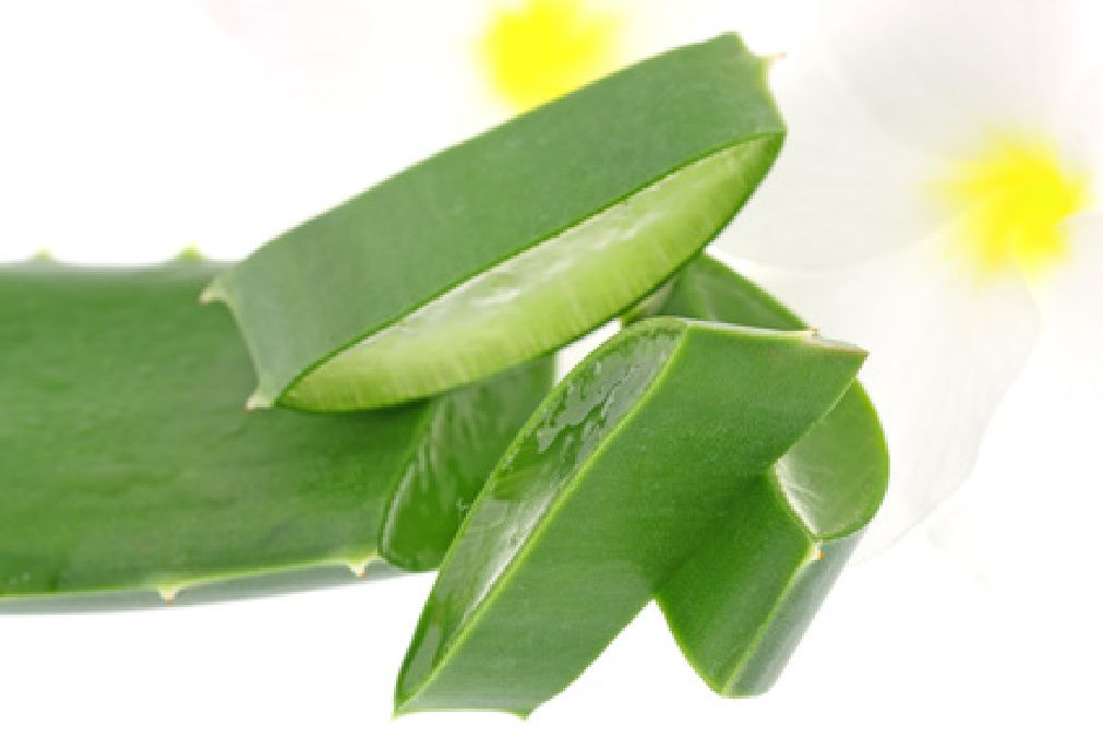 Get rid of the extra pounds with aloe vera