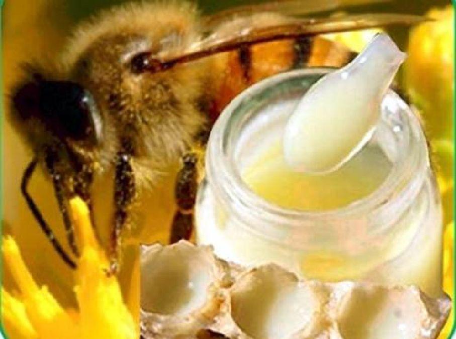 Quels sont les bienfaits d'un cure de  gelée royale ( la nourriture de la reine)  ?