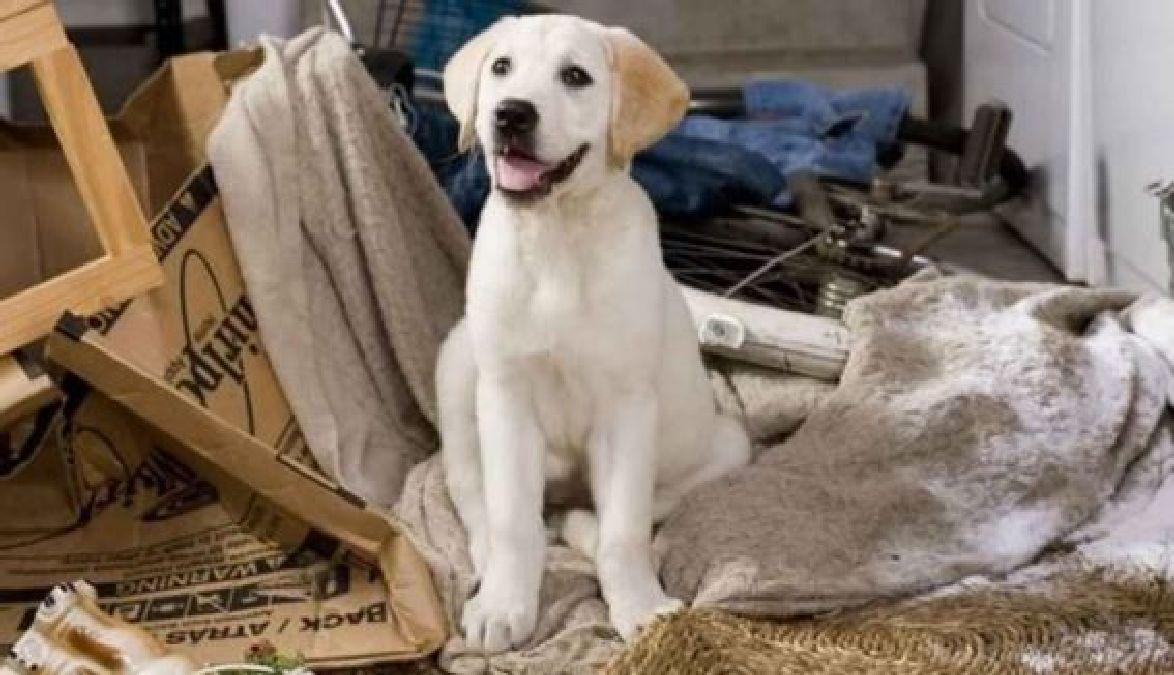 elle adopte plusieurs chiens et les abandonne tous attachés à un poteau