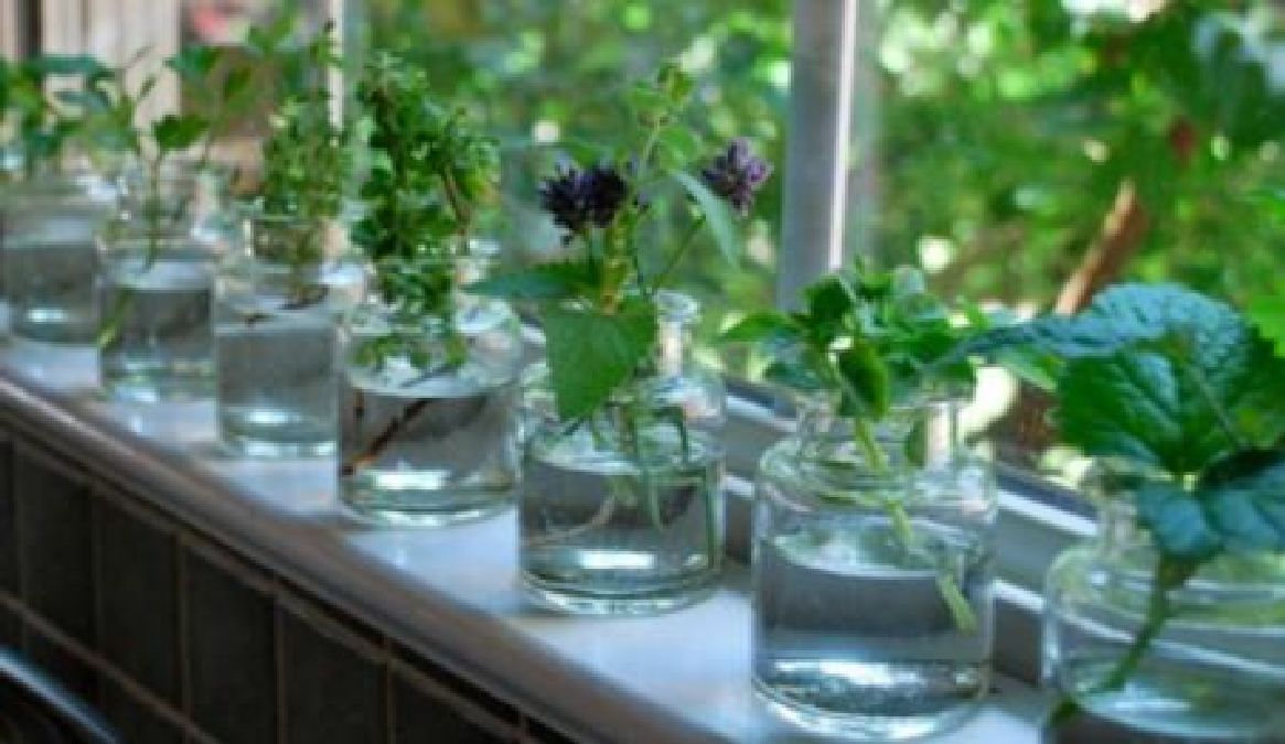 des plantes aromatique que vous pouvez planter dans l eau toute l ann e. Black Bedroom Furniture Sets. Home Design Ideas