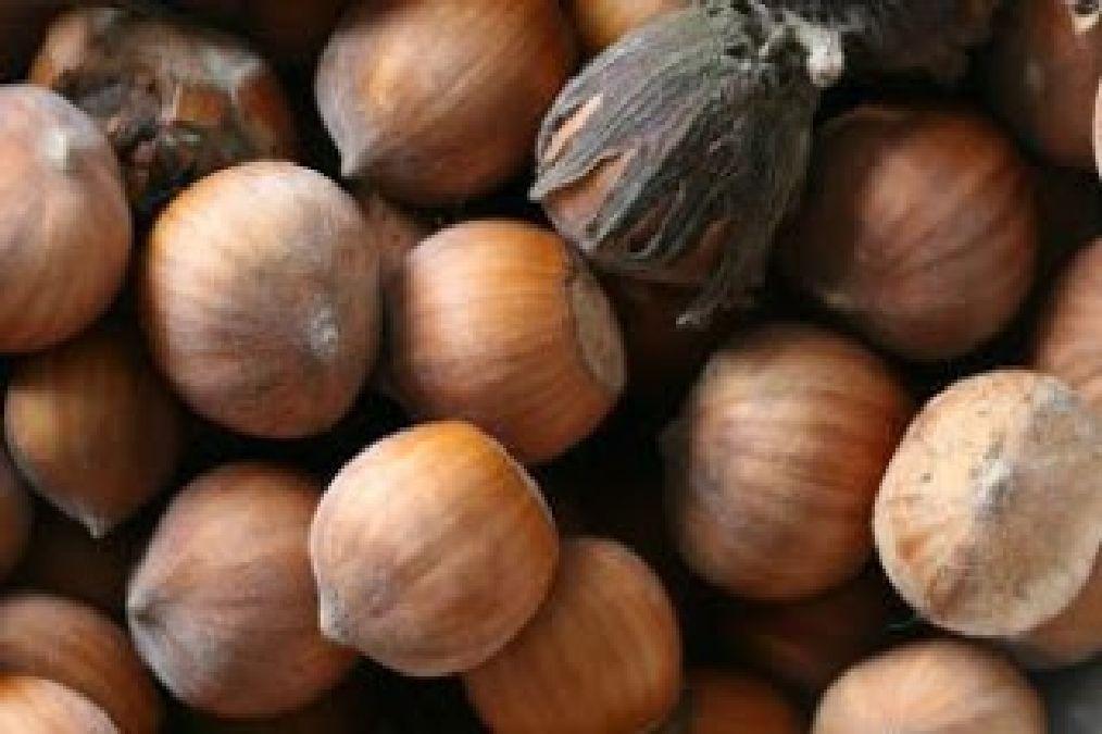 Bienfaits santé: Les atouts nutritionnels de la noisette