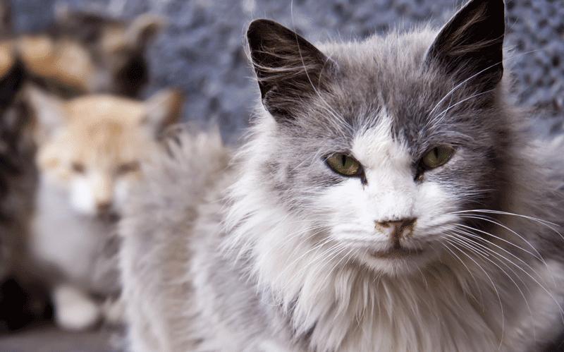 Quelques astuces pour laisser les chats du quartier loin de votre maison