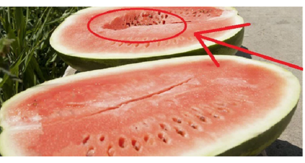 You should never eat watermelons this way