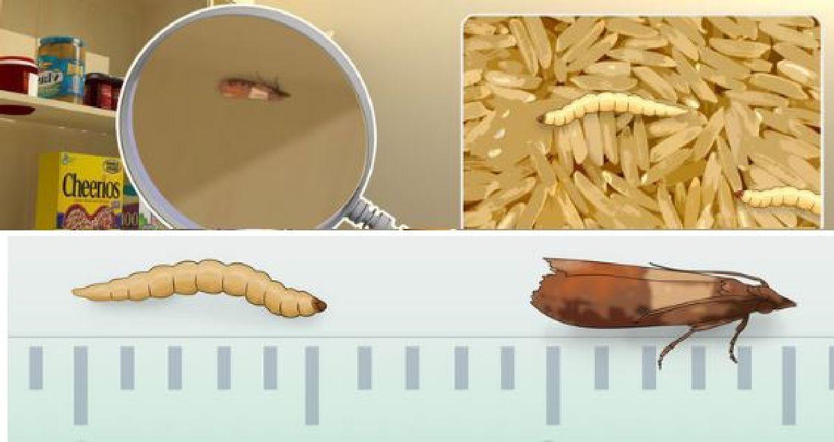 Les rem des naturels pour chasser les mites alimentaires for Astuce contre les mites
