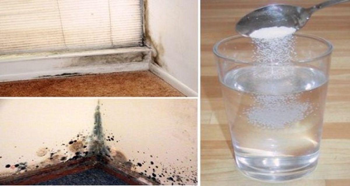 Il suffit de vaporiser ceci pour se débarrasser de la moisissure naturellement et pour toujours!