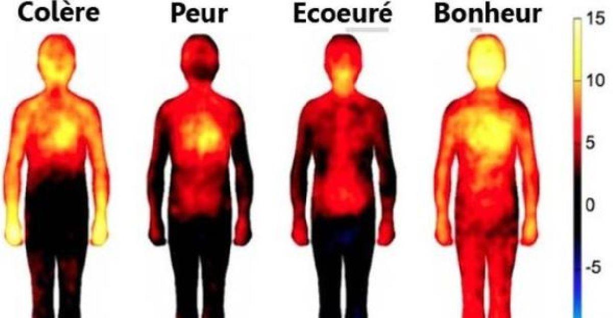 Comment nos émotions peuvent elles nous nuire ? L'impact des émotions négatives sur le corps.