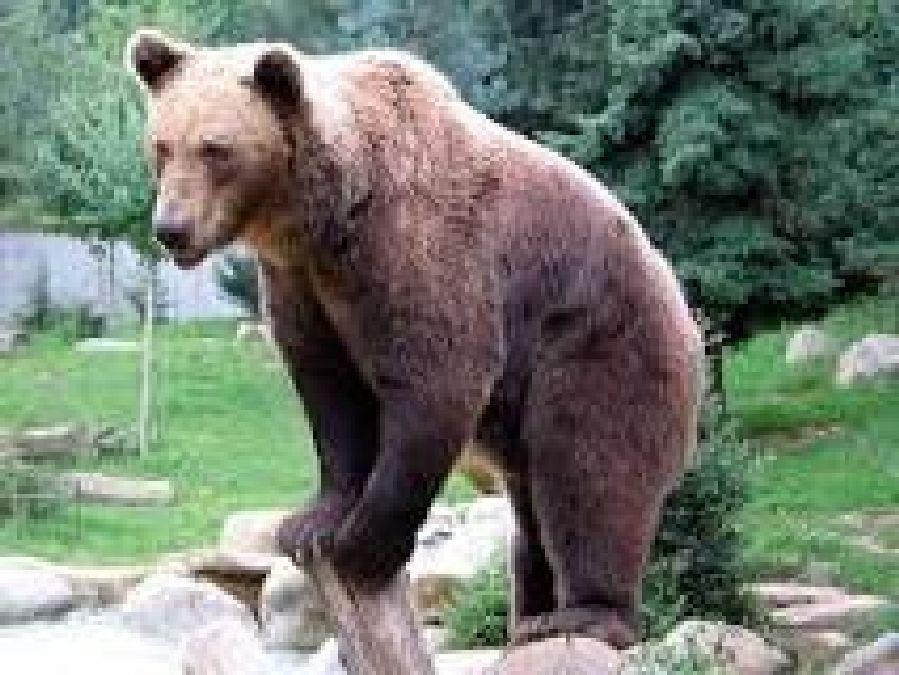 Norvège: Un ours blanc est mort de faim