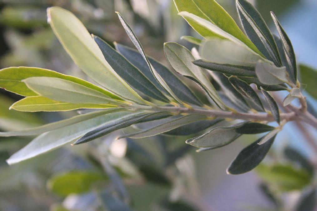 Hypertension: medicinal plants as a remedy
