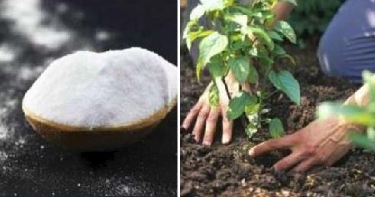 vous devez savoir quel point le bicarbonate serait utile pour vos fleurs et votre jardin. Black Bedroom Furniture Sets. Home Design Ideas