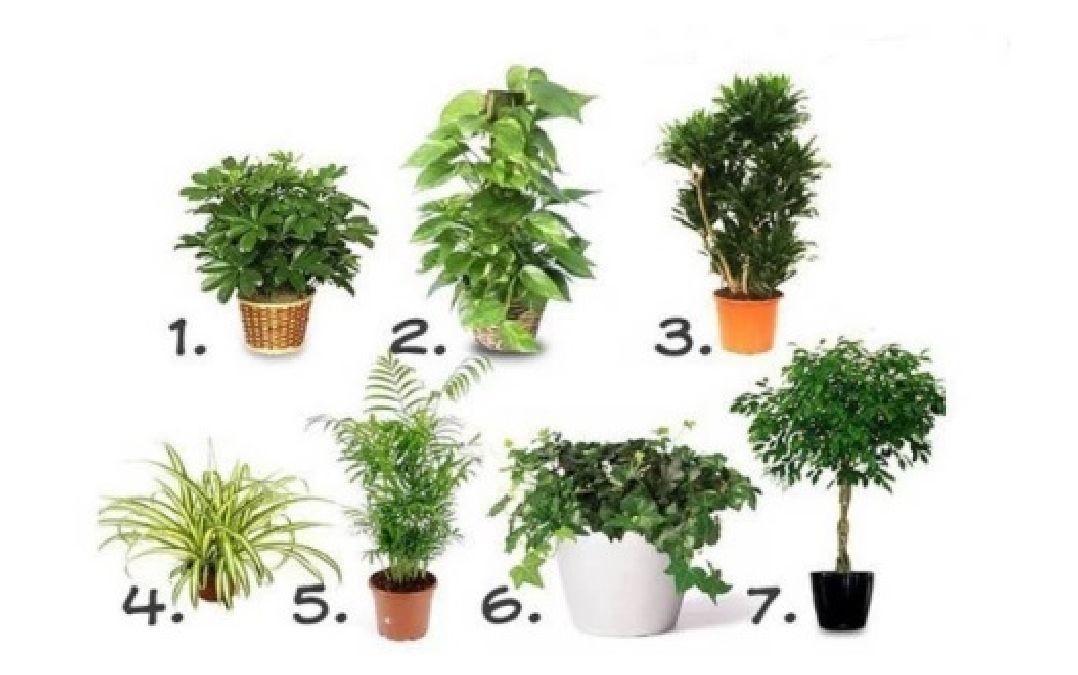 Mettez ces plantes dans tous les coins de votre maison et oubliez les maladies!