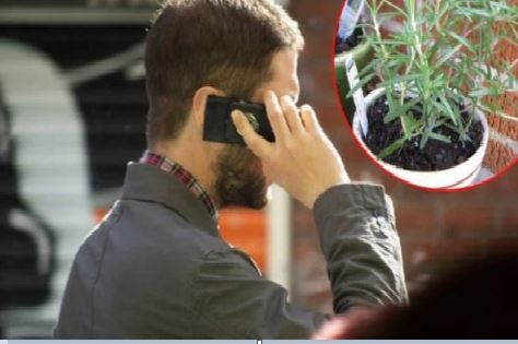 Cette plante va vous protéger contre les radiations du téléphone mobile, et vous l'avez dans votre maison!