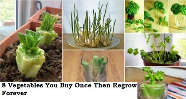 8 légumes que vous pouvez faire repousser !  Comment les cultiver ? Voici quelques conseils!