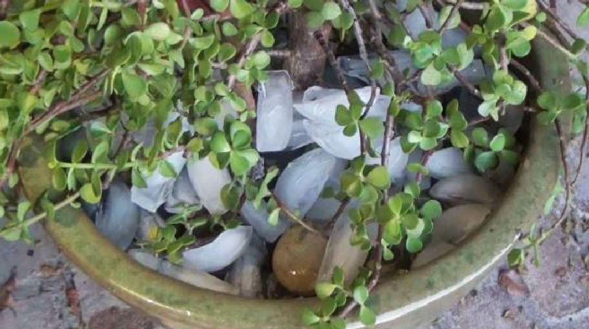 Thanks to this tip, you will never forget to water your plants