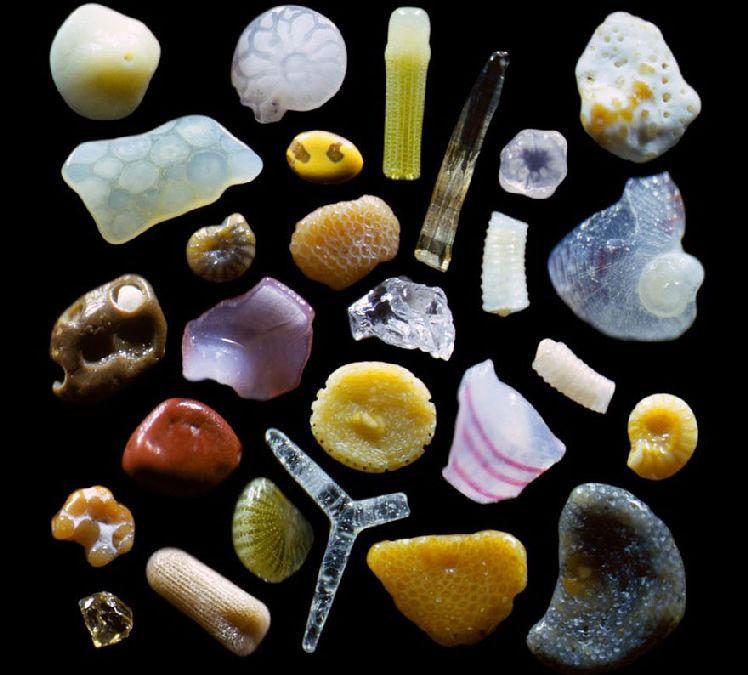 sable grossi 300 fois (1)