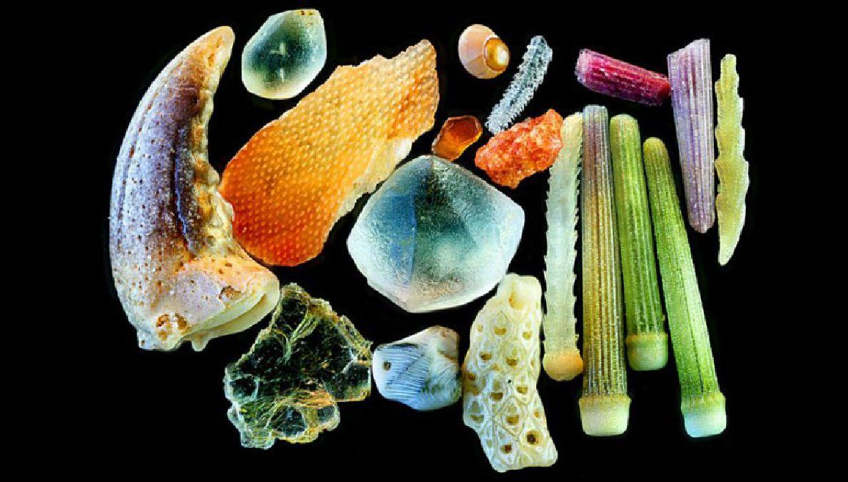 sable grossi 300 fois (6)