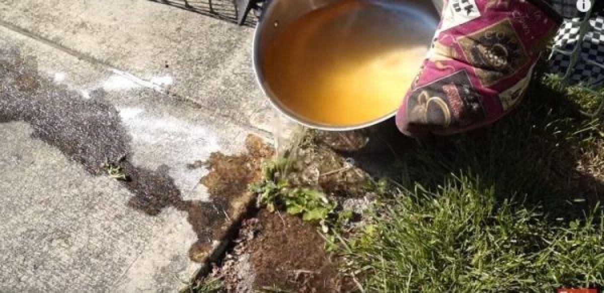 Des Nouvelles  façons  pour vous débarrasser  efficacement des fourmis !