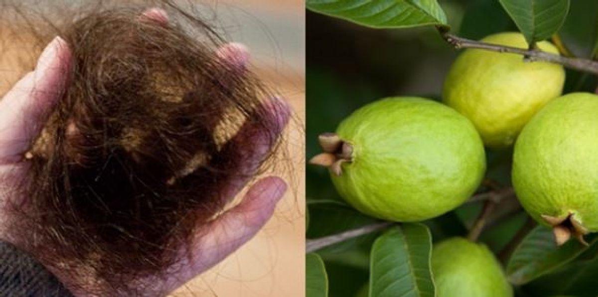 Les feuilles de cette plante pour stopper à 100% la chute de cheveux et pour les faire pousser rapidement !