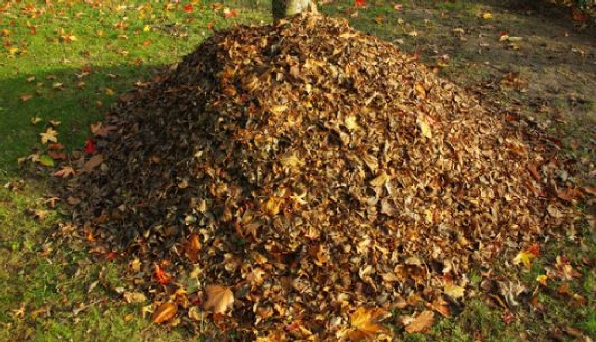 la meilleure fa on de ramasser les feuilles mortes d automne en quelques minutes. Black Bedroom Furniture Sets. Home Design Ideas