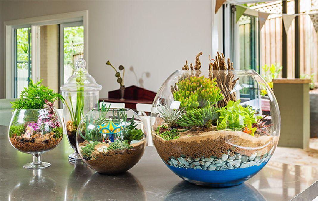 Comment faire un terrarium facilement chez toi