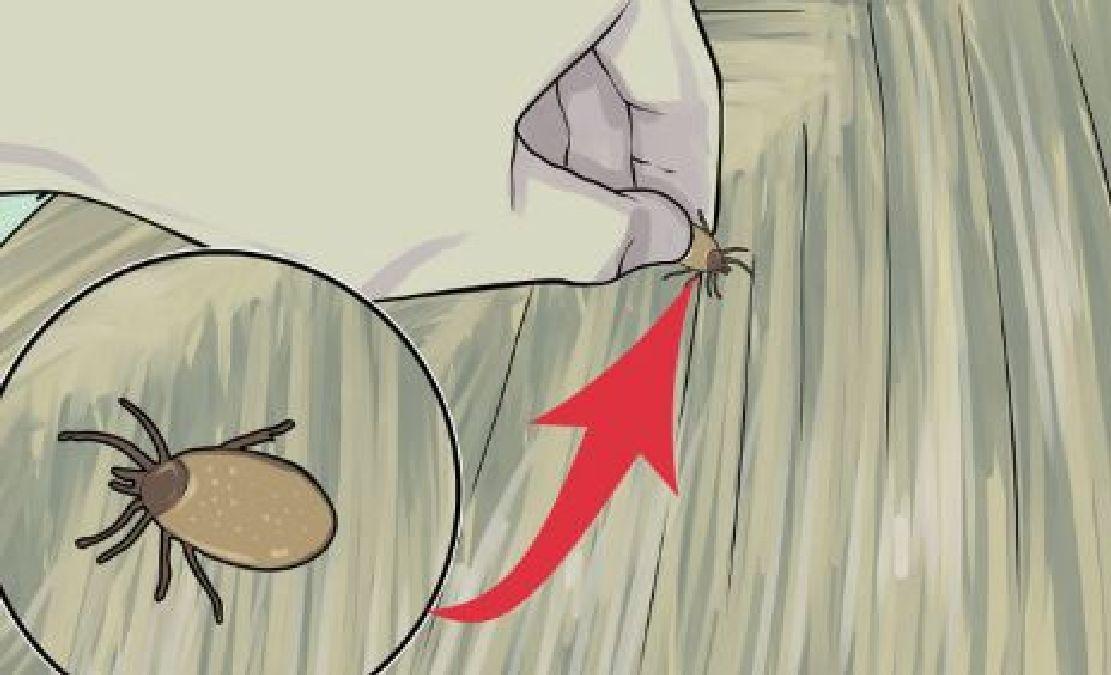 Soigner naturellement votre chat contre les tiques et les puces - Remede contre les puces de chat ...