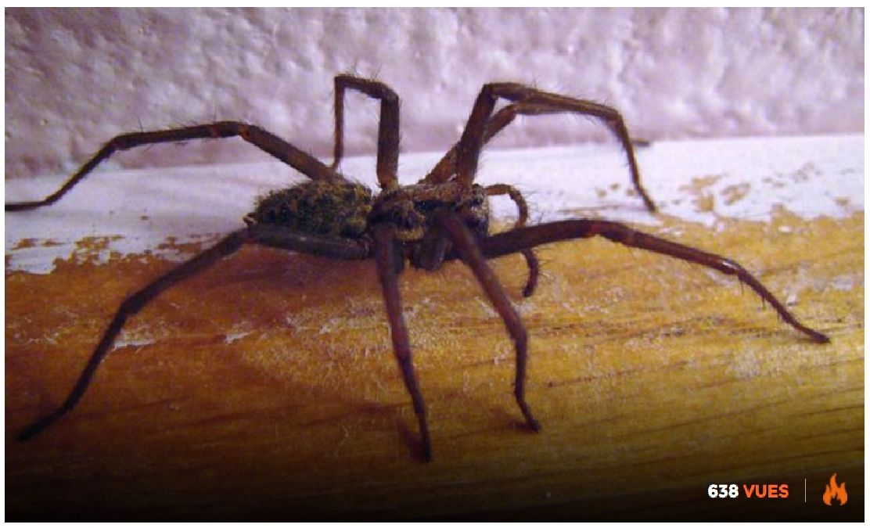 Éloigner les araignées